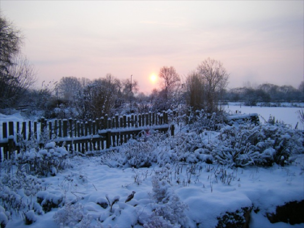 Winter in der Gärtnerei am Karpfenteich - Morgendämmerung