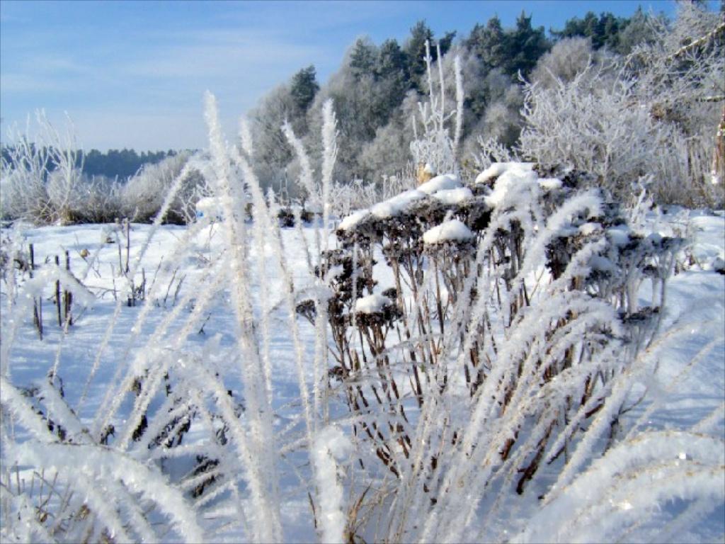 Winter in der Gärtnerei am Karpfenteich - Molinia mit Sedum / Pfeifengras mit Fetthenne