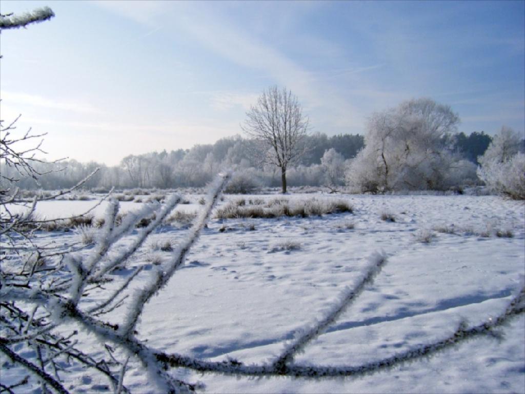 Winter in der Gärtnerei am Karpfenteich